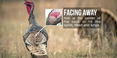 Aim to shoot turkey