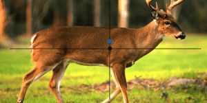 Where to aim on deer